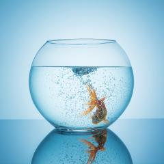 goldfish swims in bubble water in a fishbowl- Stock Photo or Stock Video of rcfotostock | RC-Photo-Stock