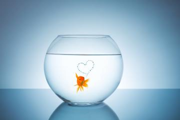 goldfish with a heart of bubbles : Stock Photo or Stock Video Download rcfotostock photos, images and assets rcfotostock | RC-Photo-Stock.: