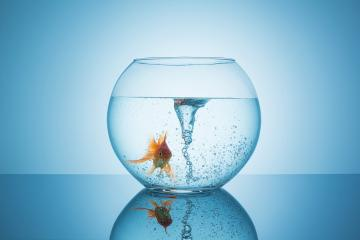 goldfish with a swirl in a fishbowl  : Stock Photo or Stock Video Download rcfotostock photos, images and assets rcfotostock | RC-Photo-Stock.: