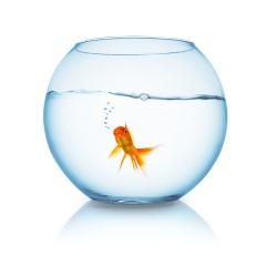 goldfish with air bubbles in a fishbowl : Stock Photo or Stock Video Download rcfotostock photos, images and assets rcfotostock | RC-Photo-Stock.: