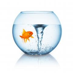 goldfish with twister in a fishbowl- Stock Photo or Stock Video of rcfotostock | RC-Photo-Stock