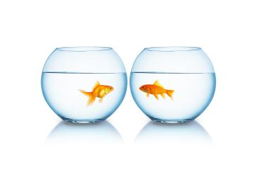 goldfishes are separated from each other- Stock Photo or Stock Video of rcfotostock | RC-Photo-Stock