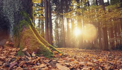 gorgeous forest in autumn, a scenic landscape with pleasant warm sunshine- Stock Photo or Stock Video of rcfotostock | RC-Photo-Stock