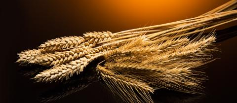 grain varieties- Stock Photo or Stock Video of rcfotostock | RC-Photo-Stock