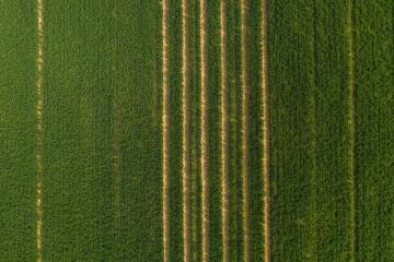 Green field with single tractor tracks. drone shot- Stock Photo or Stock Video of rcfotostock   RC-Photo-Stock