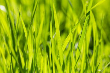 Green grass background- Stock Photo or Stock Video of rcfotostock | RC-Photo-Stock