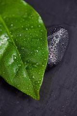 Green leaf and Black Stone with water drops : Stock Photo or Stock Video Download rcfotostock photos, images and assets rcfotostock | RC-Photo-Stock.: