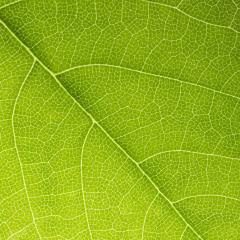 green leaf texture background : Stock Photo or Stock Video Download rcfotostock photos, images and assets rcfotostock | RC-Photo-Stock.: