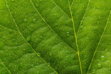 green leaf with drops- Stock Photo or Stock Video of rcfotostock | RC-Photo-Stock