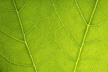 green leaves shaping on a beautiful background- Stock Photo or Stock Video of rcfotostock | RC-Photo-Stock