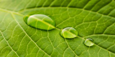 green nature leaf with drops- Stock Photo or Stock Video of rcfotostock | RC-Photo-Stock