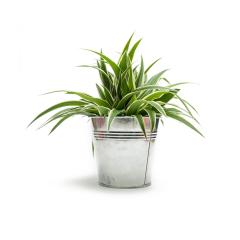 Green potted plant isolated on white background- Stock Photo or Stock Video of rcfotostock | RC-Photo-Stock