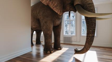 Großer Elefant im Raum als Platzproblem Konzept : Stock Photo or Stock Video Download rcfotostock photos, images and assets rcfotostock | RC-Photo-Stock.: