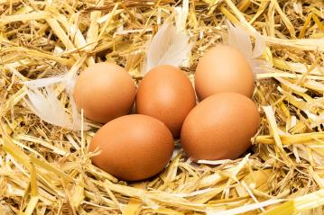 group of brown eggs in straw- Stock Photo or Stock Video of rcfotostock | RC-Photo-Stock