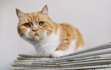 grumpy cat sits on a newspaper stack- Stock Photo or Stock Video of rcfotostock | RC-Photo-Stock