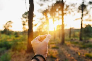 Hand Holding Bird Feather Wing on Bokeh Background with sun light rays. Spring time season.- Stock Photo or Stock Video of rcfotostock | RC-Photo-Stock