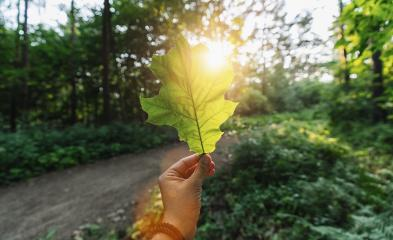hand holding green leaf against the forest with sun light rays. Spring time season.- Stock Photo or Stock Video of rcfotostock | RC-Photo-Stock