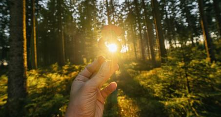Hand holds paragraph sign to the sun at a forest, symbol of Law and Justice concept image- Stock Photo or Stock Video of rcfotostock | RC-Photo-Stock