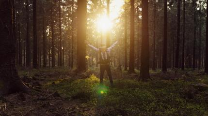Happy hiker with raised hands in air stand in a pine forest at sunset- Stock Photo or Stock Video of rcfotostock | RC-Photo-Stock