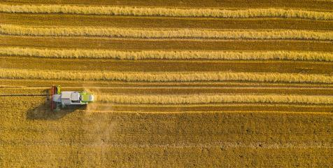 Harvesting wheat in autumn Aerial top view, drone shot- Stock Photo or Stock Video of rcfotostock | RC-Photo-Stock