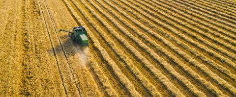 Harvesting wheat in summer. Combine harvester of an agricultural machine collects ripe golden wheat on the field. View from above.  : Stock Photo or Stock Video Download rcfotostock photos, images and assets rcfotostock | RC-Photo-Stock.: