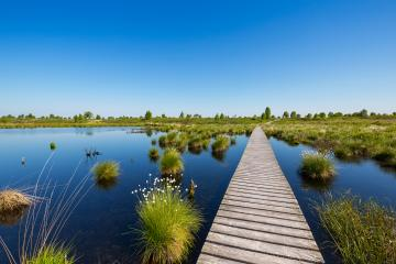 Hautes Fagnes bog landscape with lake at spring time : Stock Photo or Stock Video Download rcfotostock photos, images and assets rcfotostock | RC-Photo-Stock.: