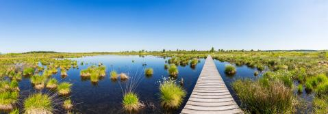 Hautes Fagnes (Hohes venn) bog landscape panorama : Stock Photo or Stock Video Download rcfotostock photos, images and assets rcfotostock | RC-Photo-Stock.: