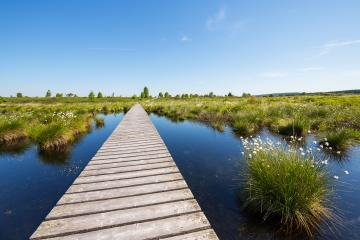 Hautes Fagnes (Hohes Venn) in spring time : Stock Photo or Stock Video Download rcfotostock photos, images and assets rcfotostock | RC-Photo-Stock.: