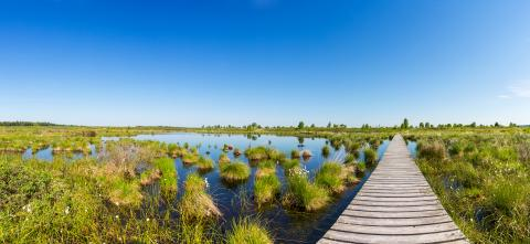 Hautes Fagnes (Hohes Venn) panorama : Stock Photo or Stock Video Download rcfotostock photos, images and assets rcfotostock | RC-Photo-Stock.: