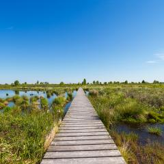 Hautes Fagnes (Hohes Venn) with trail in spring time : Stock Photo or Stock Video Download rcfotostock photos, images and assets rcfotostock | RC-Photo-Stock.:
