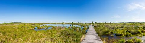 Hautes Fagnes with a boardwalk over a bog pond panorama : Stock Photo or Stock Video Download rcfotostock photos, images and assets rcfotostock | RC-Photo-Stock.:
