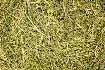 hay background texture pattern- Stock Photo or Stock Video of rcfotostock | RC-Photo-Stock