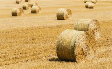 Hay bale. Agriculture field. Rural nature in the farm land.- Stock Photo or Stock Video of rcfotostock | RC-Photo-Stock