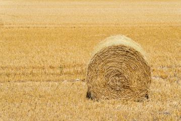 Hay bale on a agriculture field. copyspace for your individual text.- Stock Photo or Stock Video of rcfotostock | RC-Photo-Stock