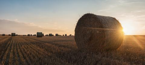 hay bales in the sunset- Stock Photo or Stock Video of rcfotostock | RC-Photo-Stock