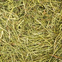 hay texture background- Stock Photo or Stock Video of rcfotostock | RC-Photo-Stock