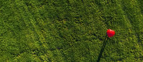 heart shape red umbrella on a green summer meadow - aerial drone shot- Stock Photo or Stock Video of rcfotostock | RC-Photo-Stock