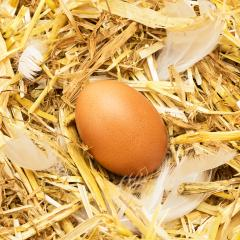 hen egg in straw- Stock Photo or Stock Video of rcfotostock | RC-Photo-Stock