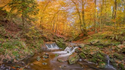 Herbst an der Hoegne, Laub, Wasser, Belgien : Stock Photo or Stock Video Download rcfotostock photos, images and assets rcfotostock | RC-Photo-Stock.: