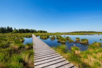 High Fens bog landscape at summer : Stock Photo or Stock Video Download rcfotostock photos, images and assets rcfotostock | RC-Photo-Stock.: