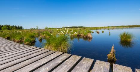 High Fens (Hautes Fagnes) a bog landscape at spring- Stock Photo or Stock Video of rcfotostock | RC-Photo-Stock