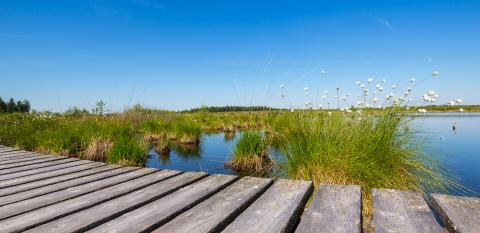 High Fens (Hautes Fagnes) a bog landscape at summer- Stock Photo or Stock Video of rcfotostock | RC-Photo-Stock
