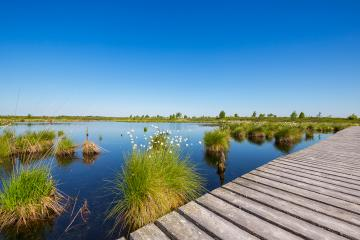 High Fens (Hautes Fagnes) bog nature landscape at spring : Stock Photo or Stock Video Download rcfotostock photos, images and assets rcfotostock | RC-Photo-Stock.: