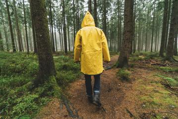 hiker with yellow raincoat walks in to the forest at autumn : Stock Photo or Stock Video Download rcfotostock photos, images and assets rcfotostock | RC-Photo-Stock.: