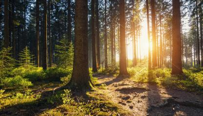 Hiking Path in to the Forest at sunset- Stock Photo or Stock Video of rcfotostock | RC-Photo-Stock