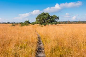 hiking trail to a bog pine at the High Fens a bog landscape at autumn, Belgium, Hohes Venn- Stock Photo or Stock Video of rcfotostock | RC-Photo-Stock