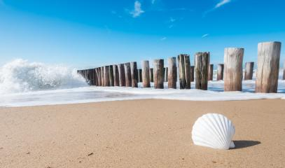holidays at the Beach in Domburg, Zeeland, Holland- Stock Photo or Stock Video of rcfotostock | RC-Photo-Stock