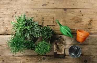 home Gardening tools on a wooden table background. Top view. - Stock Photo or Stock Video of rcfotostock | RC-Photo-Stock
