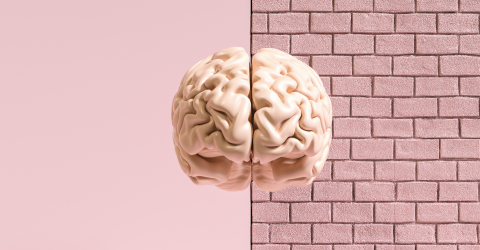 Human brain against a brick wall, concept image for feminism and woman rights- Stock Photo or Stock Video of rcfotostock | RC-Photo-Stock