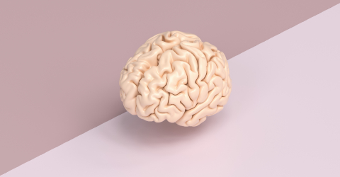 Human brain against a tow side ground, concept image for brainstorming- Stock Photo or Stock Video of rcfotostock | RC-Photo-Stock
